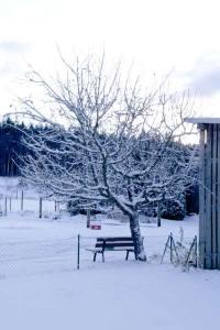 Kleiner Apfelbaum