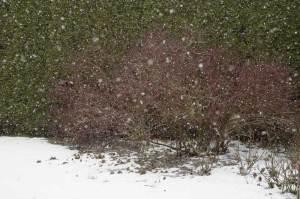 Schneefall im Februar