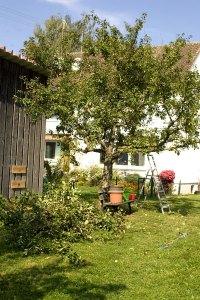 reitplatzbaum