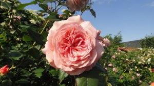 06.06.2015-A-Shropshire-lad